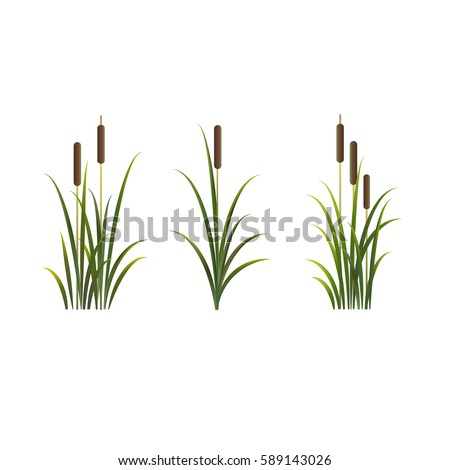 Reed illustration. Vector isolated set of reeds. Сток-фото ©
