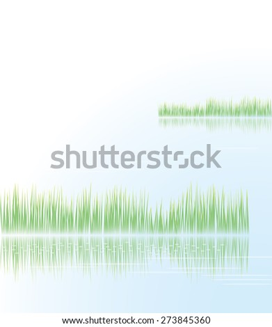 reeds and the lake surface