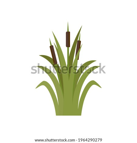 Reeds in green grass isolated on white background. Green swamp Bulrushes.   Clip art for decorate swamp. Cattails, Green Leaf, Grass, Environment, Swamp, Lake and River. Flat vector illustration