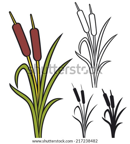 reeds (vector illustration of bulrush and grass) Сток-фото ©