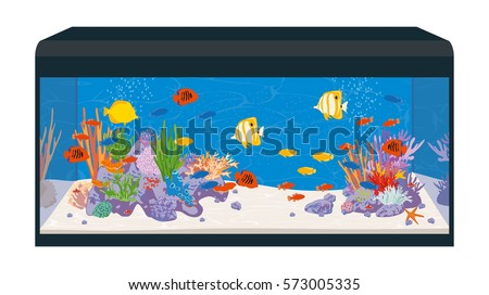 reef tank marine aquarium with