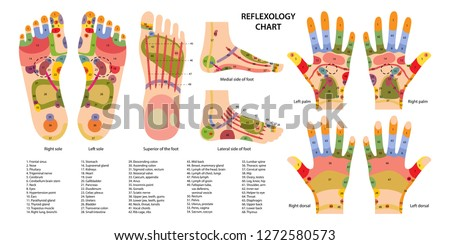 Reflex zones on the feet and hands with description of internal and body parts. Superior, lateral and medial views of foot. Palms and dorsal side of wrists. Chinese medicine. Vector illustration.