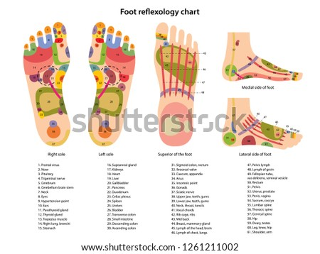 Reflex zones on the feet with description of internal and body parts. Superior, lateral and medial views of foot. Acupuncture points on the foot. Chinese medicine. Vector illustration.