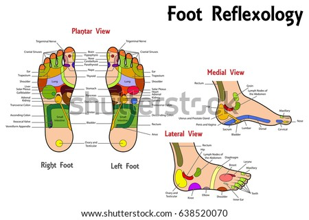 Free Reflexology Chart Download Free Vector Art Stock Graphics
