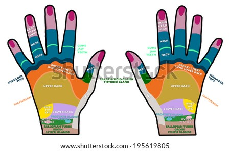 Reflexology handheld, hands backs, health, massage