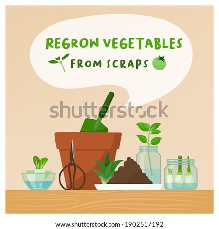 regrow vegetables from scraps