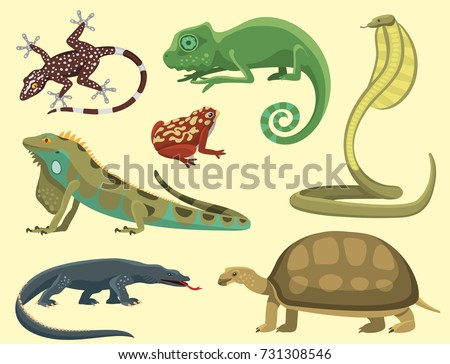 Shutterstock Reptile and amphibian colorful fauna vector illustration reptiloid predator reptiles animals.