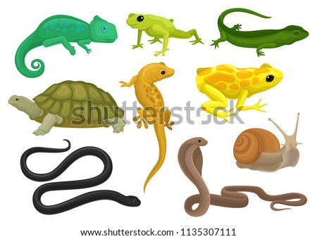 reptile and amphibian set