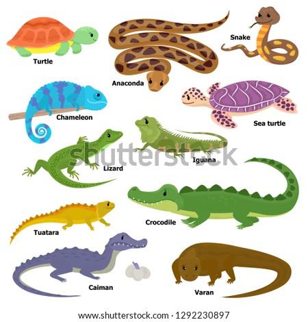 Reptile vector animal reptilian character lizard turtle iguana and chameleon pet illustration set of crocodile varan dragon isolated on white background Foto stock ©