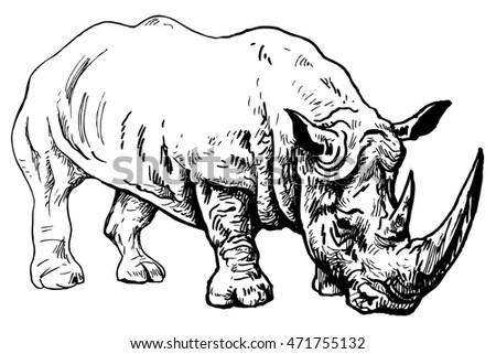 rhinoceros   endangered species