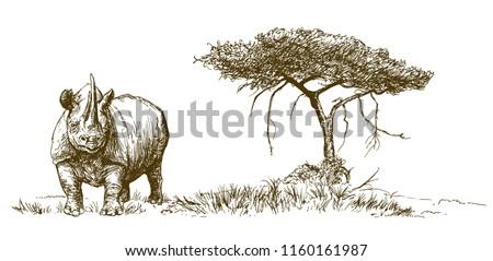 Rhinoceros. Hand drawn illustration