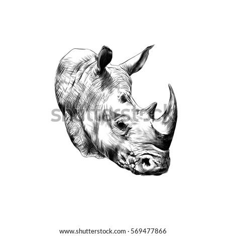 rhinoceros head sketch vector