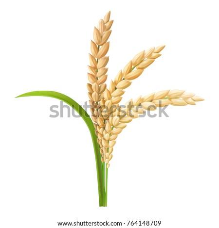 Rice ear realistic vector illustration