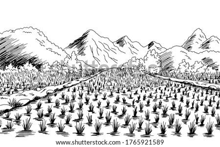 rice field graphic black white