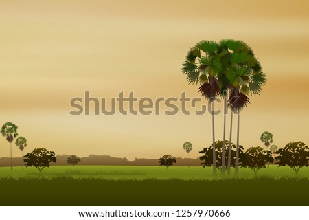 rice field natural background