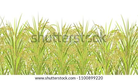 rice field seamless horizontal