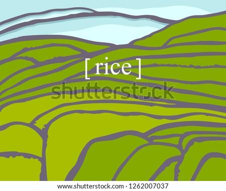 rice fields plantation on