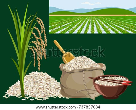 Rice harvest concept. Set of vector illustrations