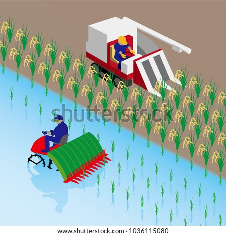 rice planting and rice reaping
