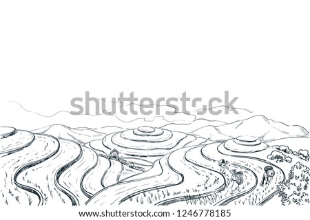 rice terrace fields  vector