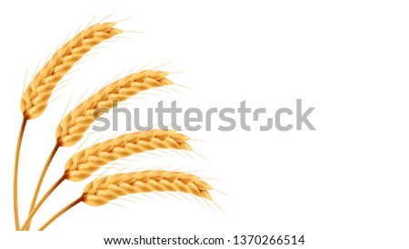 Rice vector wallpaper. free space for text. copy space. blank. #1370266514
