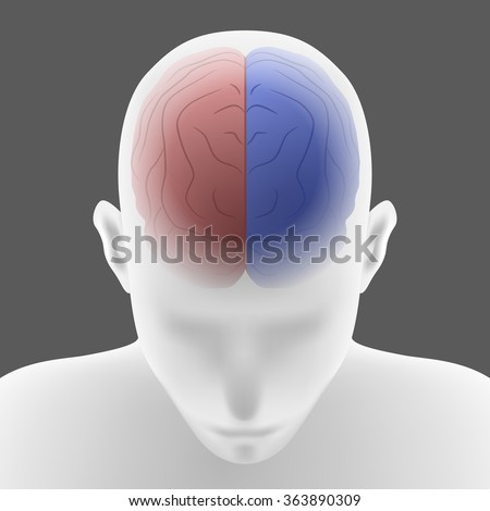 right brain and left brain, human head front top view, vector illustration