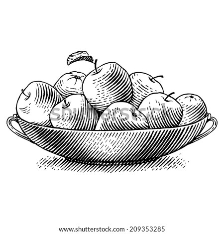 ripe apples in a dish. engraved ...