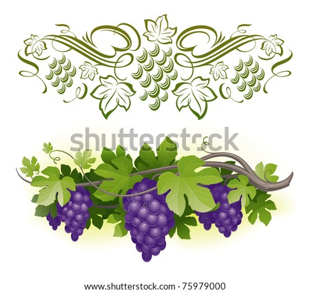 Ripe grapes on the vine & decorative calligraphic vine