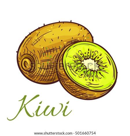 ripe kiwi fruit sketch