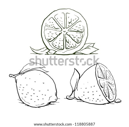 ripe lemon with leaf. vintage set. vector illustration isolated on white background