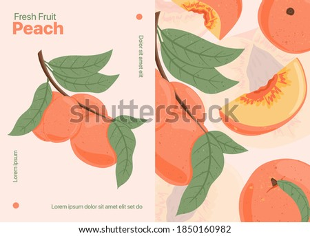 Ripe peaches, whole, sliced and half sliced peaches. Sweet nectarine fruits vector hand drawn card design. Peach seed, leaves. Juice or jam poster concept.
