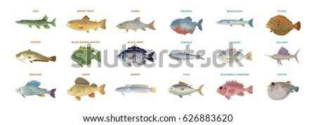 river fish set isolated fish