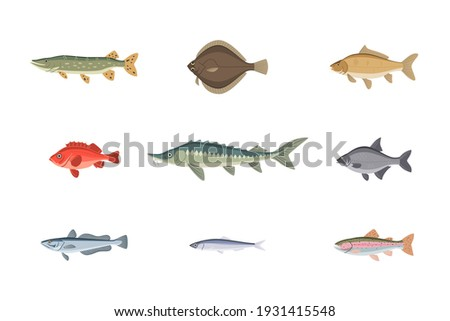 River or sea fish variety underwater aquatic wildlife set. Different freshwater or saltwater fish as tuna, salmon, catfish, carp, dorado, trout vector illustration isolated on white background