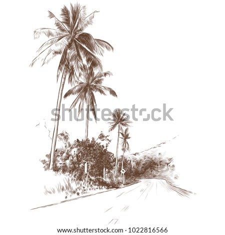 road and jungle with palm trees