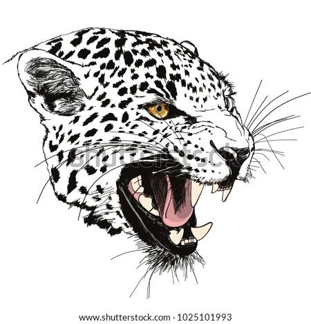 roaring leopard head hand drawn