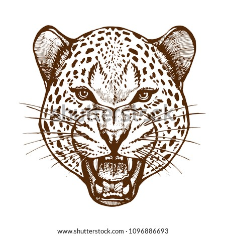 roaring leopard head with bared