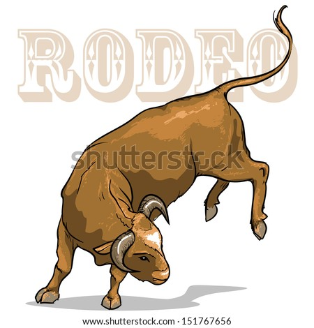 rodeo bull  isolated