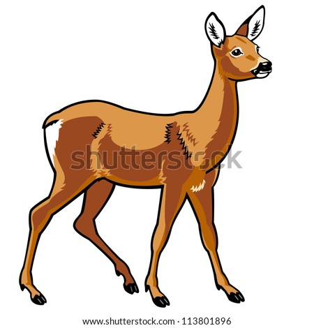 roe deer,vector image isolated on white background,side view picture