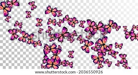 romantic purple butterflies
