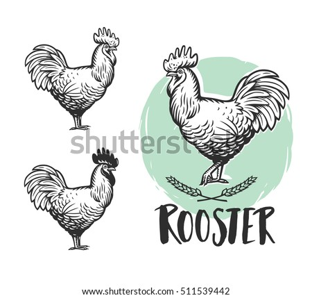 Rooster logotypes set. Rooster logo. Hen meat and eggs. Rooster vintage produce elements. Badges and design elements depicting Cock. Rooster Vector illustration