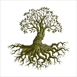 Root Of The Tree logo illustration. Vector silhouette of a tree, green forestry strong root tree logo, High detail illustration of an old olive tree, hand drawn, vector.