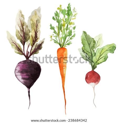 root vegetable, watercolor, vegetables