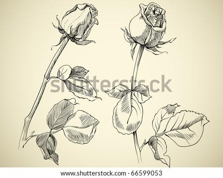 rose Sketch Images Stock Photos amp Vectors  Shutterstock
