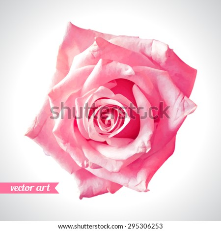 rose close up vector art love