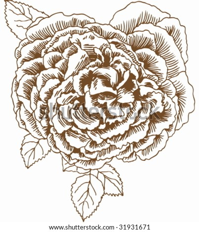 rose flower sketch. stock vector : Rose Drawing