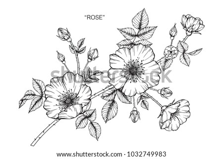 Rose flower drawing  illustration. Black and white with line art.  #1032749983