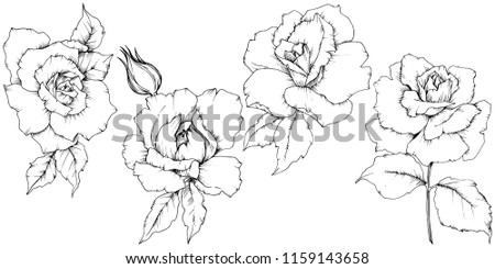 rose flower in a vector style