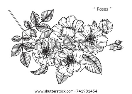 Rose flowers drawing with line-art on white backgrounds. #741981454