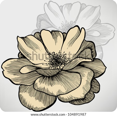 Rose flowers, hand-drawing. Vector illustration.