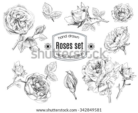 Rose flowers set in sketch stile. Vector illustration